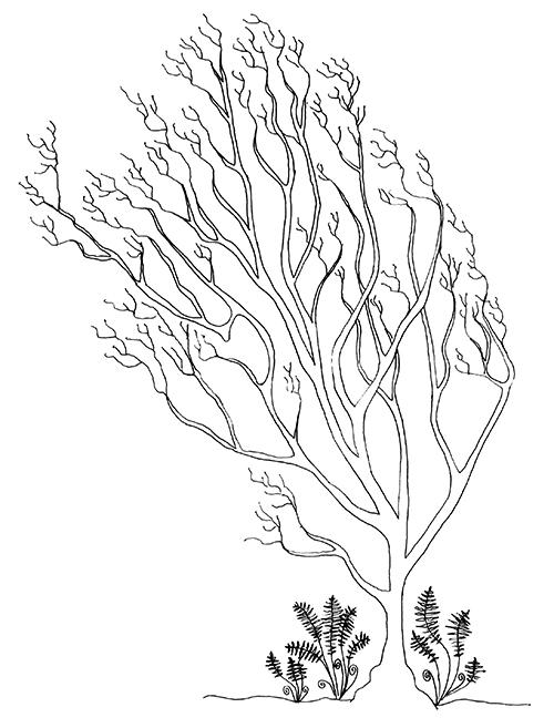 contact_tree